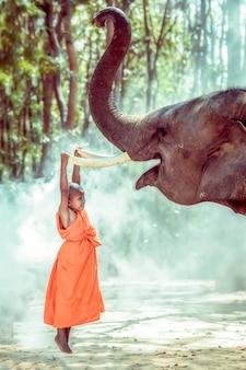 Novicios monje budista siendo elefante compasivo, surin, tailandia