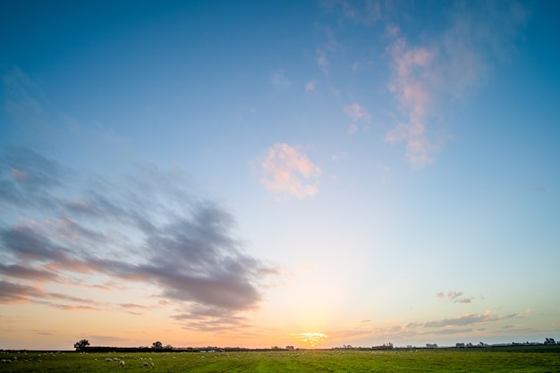 Nueva zelanda agricultura. ovejas y pastizales que crecen en la zona rural. puesta de sol con luz cálida y escena de cielo azul.