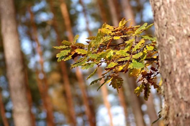 Nuevas hojas en primavera