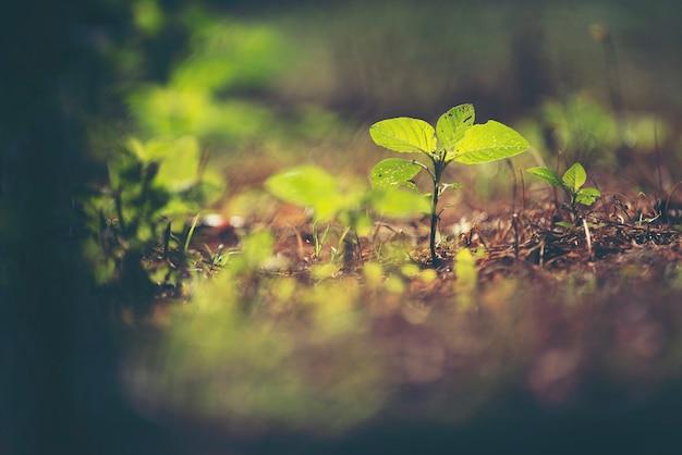 Nuevo concepto de vida, siembra de plantas en la naturaleza.