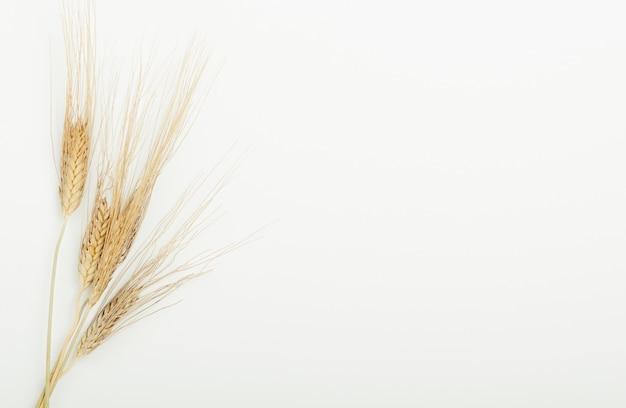 Oídos secos de cereales en la viga sobre un fondo blanco.