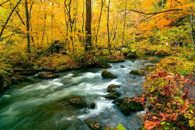 Oirase mountain stream fluye rápidamente pasando verdes rocas cubiertas de musgo