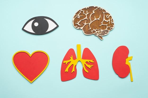 Ojo, cerebro, pulmones, corazón, riñón sobre fondo azul.