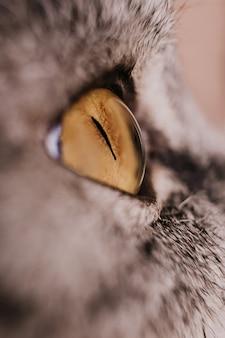 Ojo de gato amarillo en primer plano de perfil. gato atigrado gris. macro