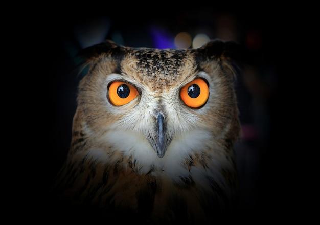 Ojos de eagle owl en la oscuridad.