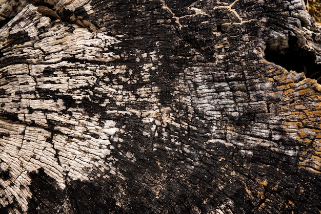Old cracked bark wooden stump textura de madera