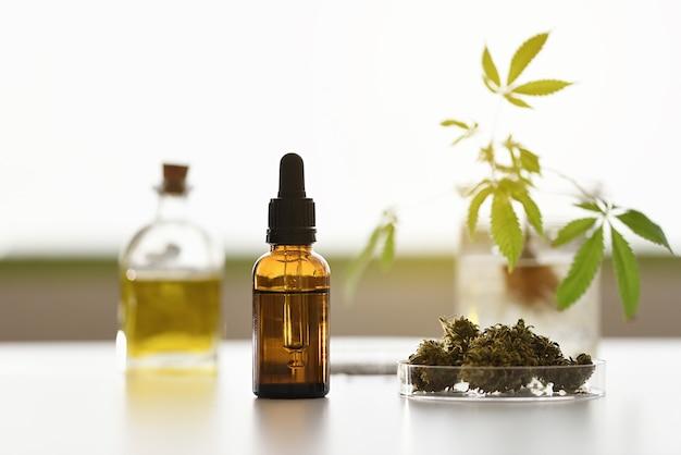 Olla de aceite de cbd de laboratorio con semillas, flores y planta de cannabis desenfocada