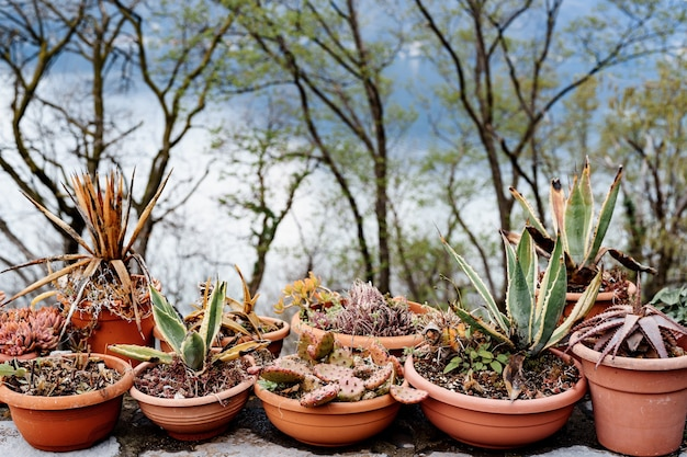 Ollas de barro marrón con suculentas y cactus variados.