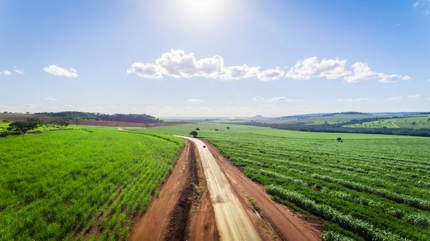 Opinión aérea del campo de la plantación de la caña de azúcar con la luz del sol. agrícola industrial.