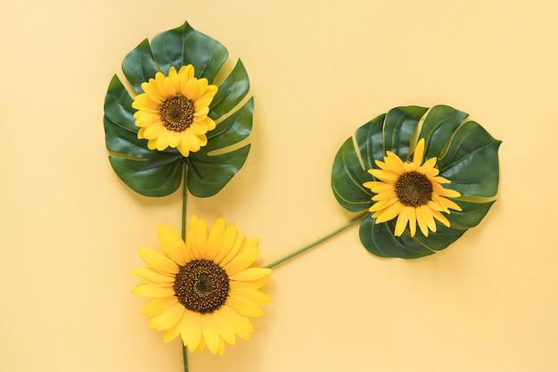 La opinión de alto ángulo de girasoles frescos en monstera se va sobre superficie amarilla