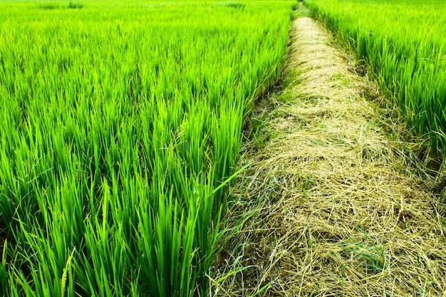 Opinión del cielo de color verde hermoso del campo