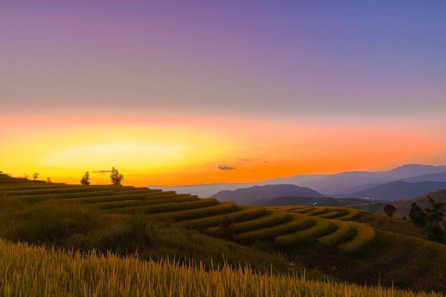 Opinión hermosa del paisaje de las terrazas del arroz en chiang mai, tailandia.