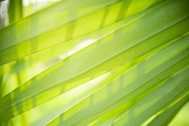 La opinión de la naturaleza del primer de la hoja de palma verde y borrosa en jardín bajo luz del sol usando como fondo plantas verdes naturales ajardina