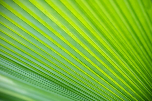 La opinión de la naturaleza del primer de la hoja de palma verde y borrosa en jardín usando como fondo las plantas verdes naturales ajardina