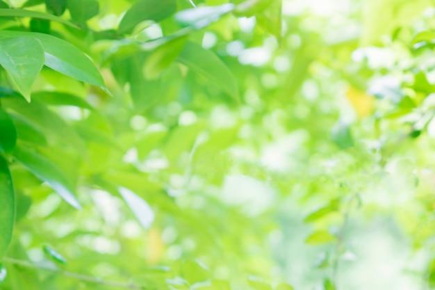 Opinión de la naturaleza del primer de la hoja verde en el verdor borroso