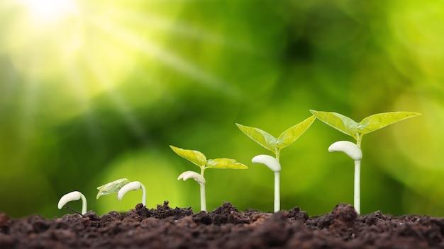 Orden de crecimiento de plantas jóvenes, plantas o árboles jóvenes sobre fondo natural.