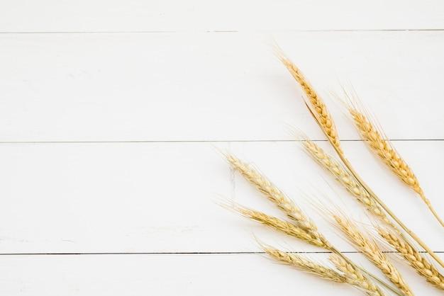 Oreja de trigo de color dorado delante de la pared de madera blanca