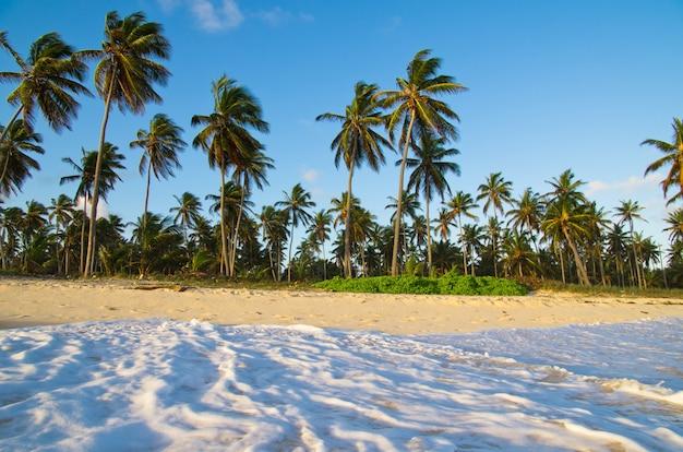 Orilla de la playa tropical