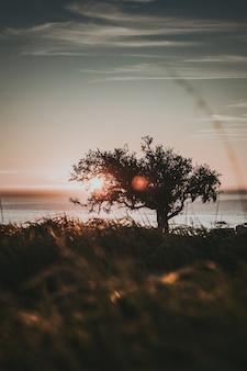 Orilla vertical de un árbol en la orilla durante la puesta de sol