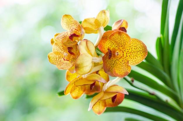 Orquídea amarilla con fondo de patrón borroso