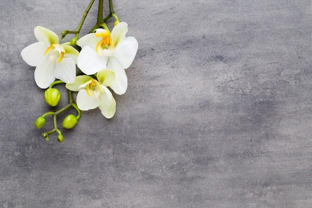 Orquídea de belleza sobre un fondo gris