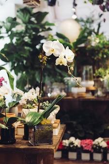 Orquídea blanca en florero de vidrio transparente