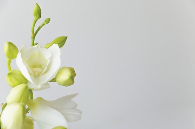 Orquídea blanca sobre fondo de color gris