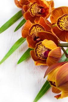 Orquídea cymbidium con color marrón sobre un fondo blanco