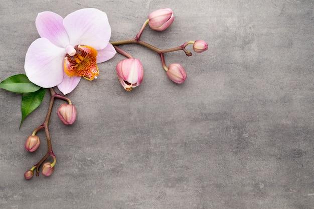 Orquídea floreciente en la vista superior de la mesa gris