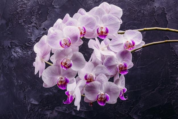Orquidea floreciente