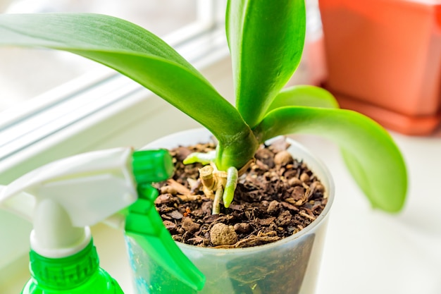 Orquídea moss en una maceta de plástico y spayer en el alféizar de la ventana. concepto de cuidado de plantas de la casa