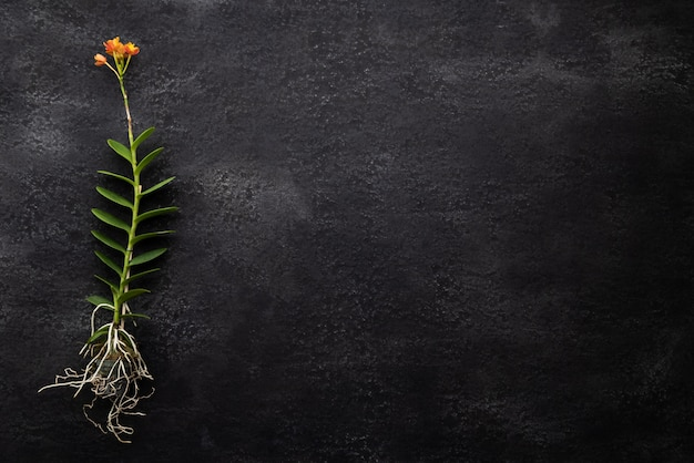 Orquídea naranja sobre fondo oscuro
