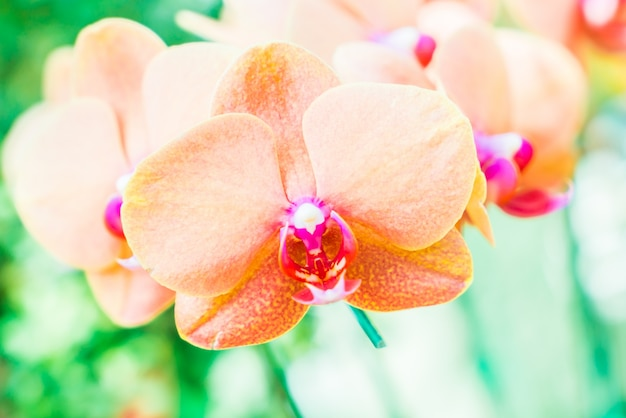 Orquídea orquídeas flores púrpura primer