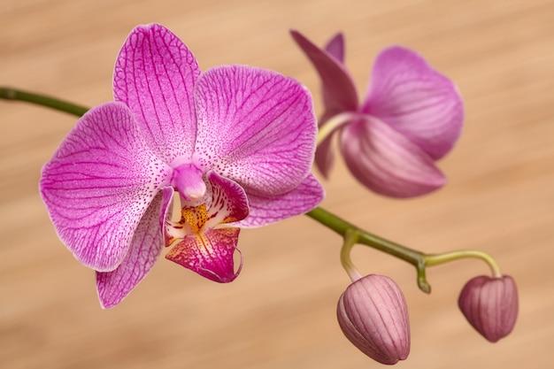 Orquídea púrpura floreciente en mesa de madera
