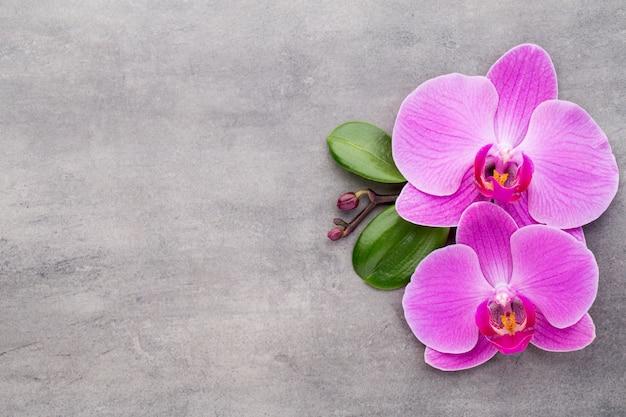 Orquídea rosa sobre fondo gris.