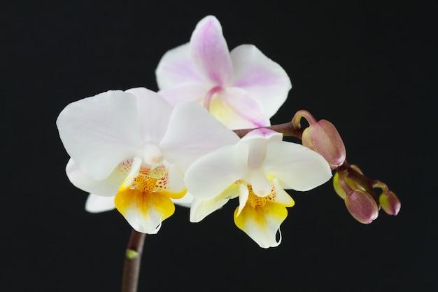 Orquídea sobre fondo oscuro