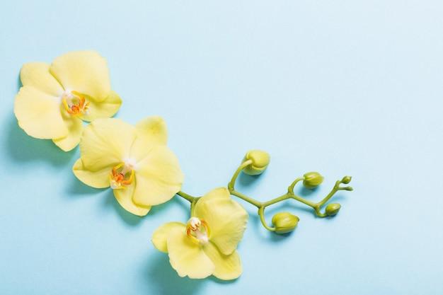 Orquídeas amarillas sobre fondo de papel azul