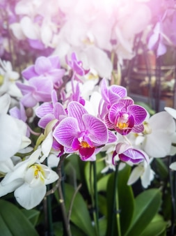 Orquídeas con flores blancas y rosas en una florería.