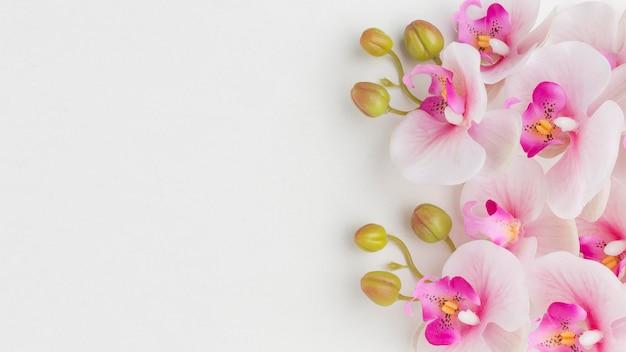 Orquídeas planas con espacio de copia