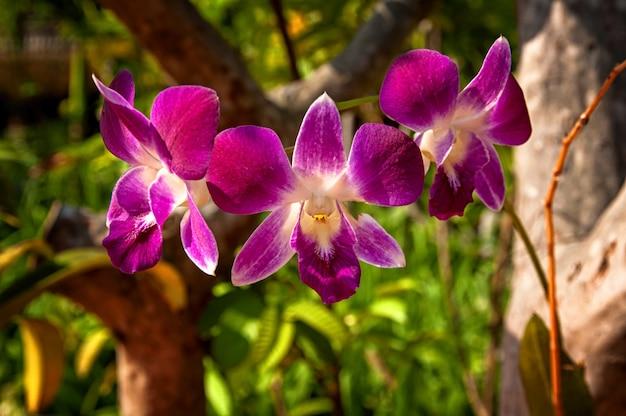 Orquídeas púrpuras y blancas con un fondo borroso en el parque