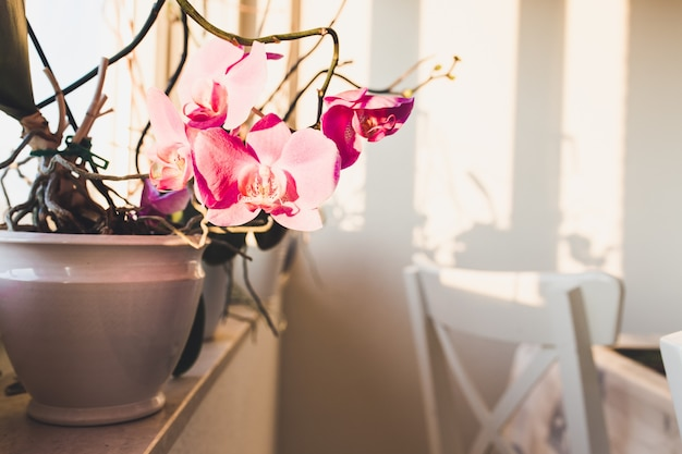 Orquídeas rosadas en un jarrón en un alféizar con sillas blancas