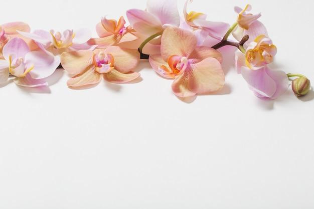 Orquídeas sobre fondo blanco.