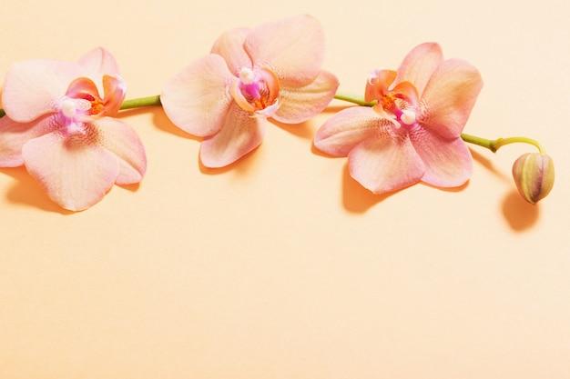 Orquídeas sobre fondo naranja