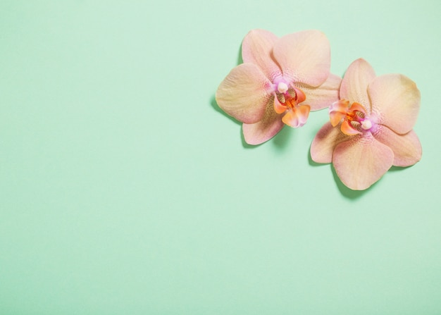 Orquídeas sobre fondo verde