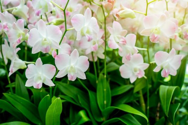 Orquídeas con sol en el jardín