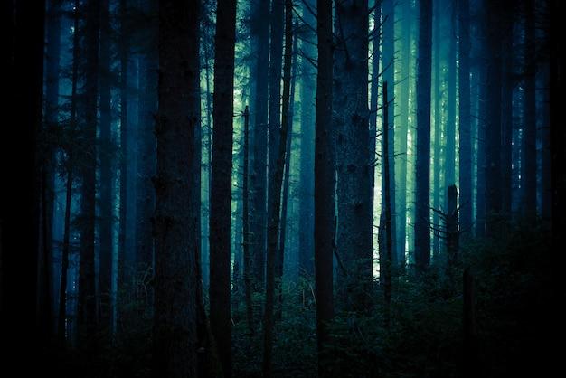 Oscuro bosque espeluznante