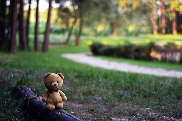 Oso de peluche en el bosque en verano fondo de verano imagen divertida concepto de infancia fabuloso ph