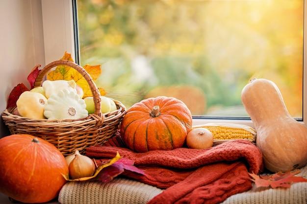 Otoño acogedor bodegón con calabazas naranjas, manzanas en una canasta, maíz y suéteres en la ventana.
