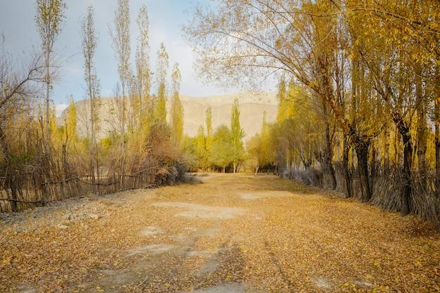 El otoño amarillo y verde deja árboles en campo.