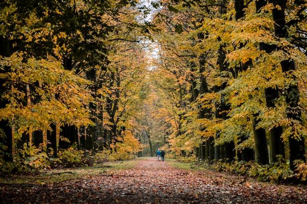 Otoño caminando en el bosque